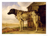 Dog on a Chain  1653-4