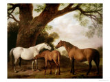 Two Shafto Mares and a Foal  1774