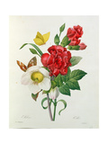 Christmas Rose  Helleborus Niger and Red Carnation  Les Choix Des Plus Belles Fleurs Redoute