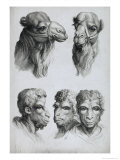 Similarities Between the Head of a Camel and a Man