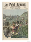 The Wine Harvest  from Le Petit Journal  31st October 1891