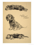 Dandie Dinmont Puppies  1930  Just Among Friends  Aldin  Cecil Charles Windsor