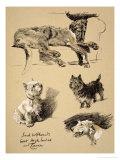 Irish Wolfhound  West Highlander and Cairn  1930  Just Among Friends  Aldin