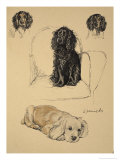 Spaniels  1930  Just Among Friends  Aldin  Cecil Charles Windsor
