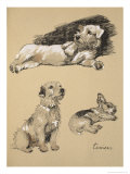 Terriers  1930  Just Among Friends  Aldin  Cecil Charles Windsor