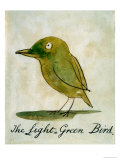 The Light Green Bird  from Sixteen Drawings of Comic Birds