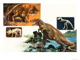 Dinosaurs and Skeletons Stegasaurus and Tyranosaurus
