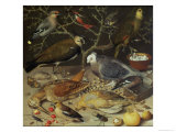 Still Life of Birds and Insects  1637