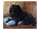 Black Standard Poodle on a Blue Cushion  1895