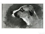 Head of a Dog with Short Ears  1879