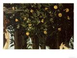 Primavera  Detail of the Orange Tree  c1478