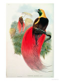 Bird of Paradise  Engraved by T Walter