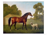Dungannon  the Property of Colonel O'Kelly  Painted in a Paddock with a Sheep  1793