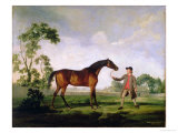 "The Duke of Ancaster's Bay Stallion ""Spectator""  Held by a Groom  c1762-5"