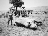 Theodore Roosevelt with a White Rhino During His Post-Presidential African Safari  March 1910