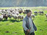 A Shepherd Stands by His Sheep in Miclosoara  Romania  October 2006