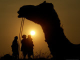 A Camel Stands as Villagers Walk at Sunrise at the Annual Cattle Fair in Pushkar  November 3  2006