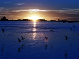 The Sun Sets as Sea Gulls Flies Over Flooded Argentina's Pampas