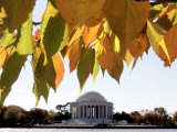 Fall Foliage Frames the Jefferson Memorial on the Tidal Basin Near the White House