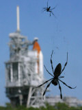Spiders Hang from Their Web Near the Space Shuttle Atlantis
