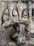 A Young Long-Tailed Macaque Sits Alone While Enjoying a Treat at Wat Prang Sam Yot