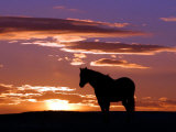 A Wild Horse Lingers at the Edge of the Badlands Near Fryburg  ND