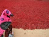 A Woman and Her Child Walks Past Drying Chilies
