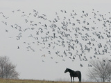 Seagulls Fly Over a Horse on a Foggy Christmas Day
