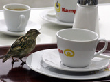 A Sparrow Trips Over a Tray