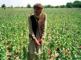 An Afghan Farmer Working