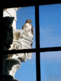 A Red-Tailed Falcon Sits Perched Outside a Third Floor Window of the Statehouse