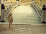 Nara City  Nara  Japan