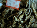 Seahorses  Medicines For Sale  Yichang  China