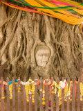 Buddha in Tree Ruts at Ayuthaya  Siam  Thailand
