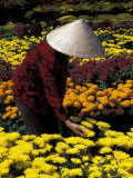 Gardens with Woman in Straw Hat  Mekong Delta  Vietnam