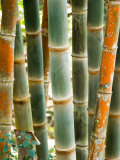 Bamboo  Doi Suthep  Thailand