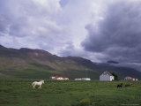 Horse Farm with Mountains in Background  Vatnasdalsholar Hills  North West Islands  Iceland