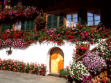 Flowers and Chalet in the Resort Area  Gstaad  Switzerland