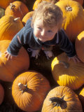 Young Boy Searches the Pumpkin Patch at Halloween