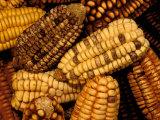 Peruvian Corn  Peru