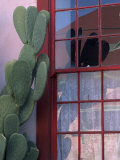 Cactus and Window  Barrio District  Tucson  Arizona  USA