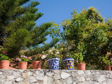 Decorative Potted Plants on Wall  Guanajuato  Mexico