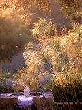Fountain  Rancho la Puerta  Baja  Mexico