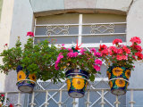 Colorful Potted Flowers on Balcony  Guanajuato  Mexico