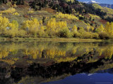 Fall Reflections in Pond  Telluride  Colorado  USA
