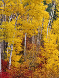 Autumn Color in the Flathead Valley  Montana  USA