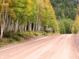 Aspen Lined Dirt Road  Lake City  Colorado  USA