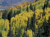 Mountains with Yellow Aspen and Green Pine in Fall  Three Lakes Trail  Crested Butte  Colorado  USA