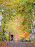 Mountain Biker on Forest Road near Copper Harbor  Michigan  USA