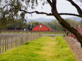 Red Barn near Vineyards  Napa Valley  California  USA